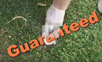 Guaranteed Termite Protection Video